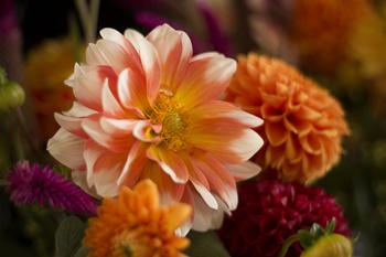 marika flower