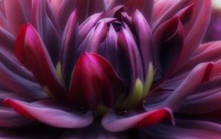 enlightening body and mind | purple flower